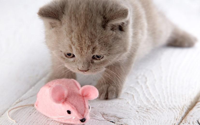 Choosing Cat Toys