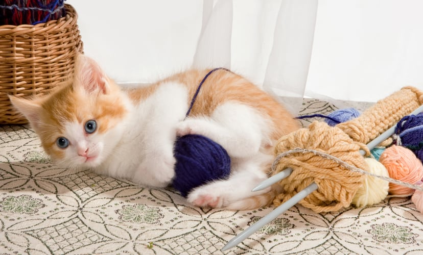 Cat Playing with Strings