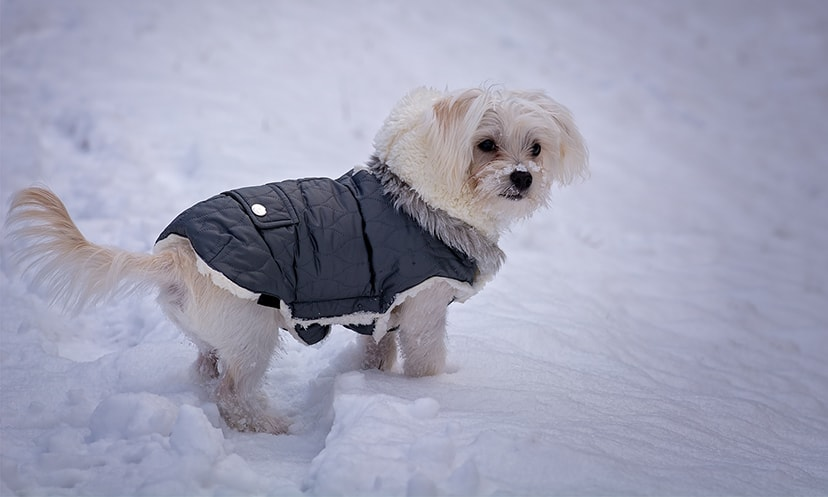 Winter Clothing For Dogs